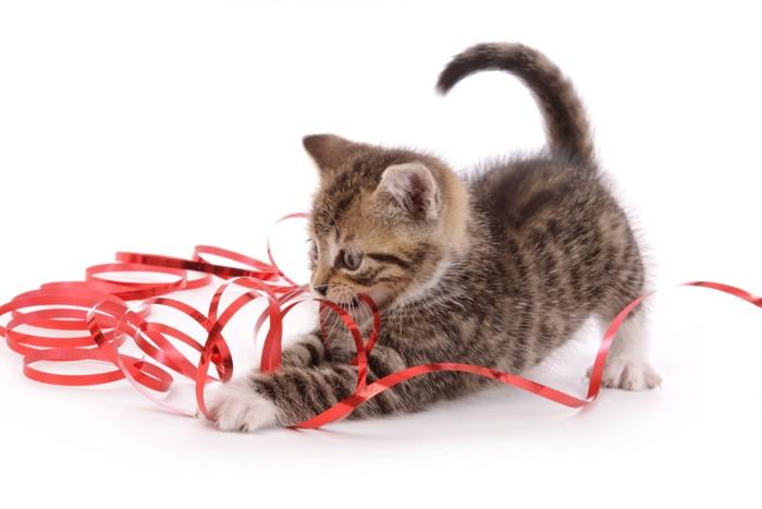 赤いリボンで遊ぶ子猫