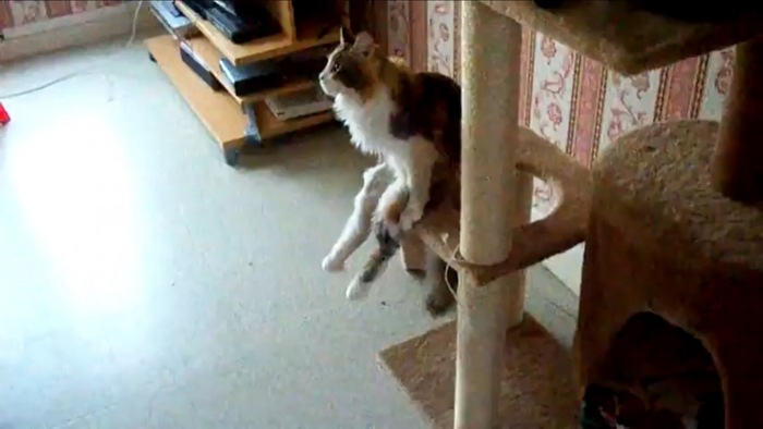 一点をみつめる猫