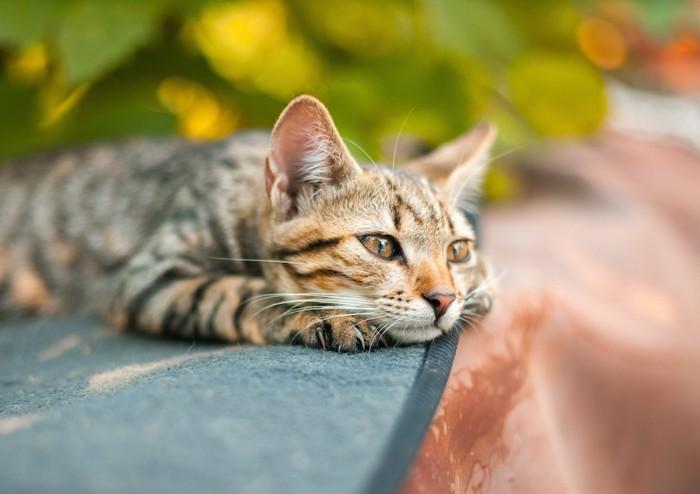 マットの上で日なたぼっこする猫