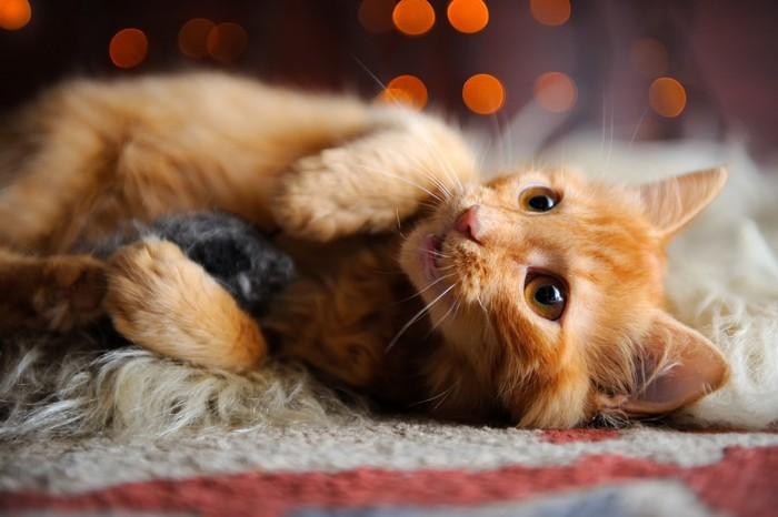 ねずみのおもちゃを抱っこする子猫