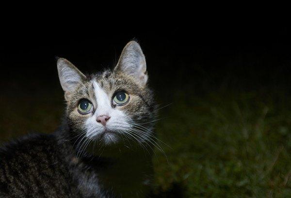 外の暗いところにいる猫