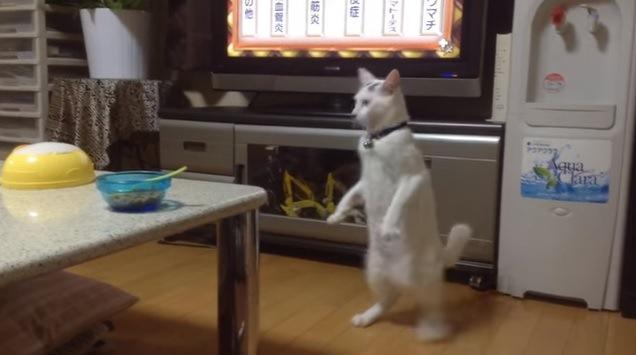 後ずさる猫