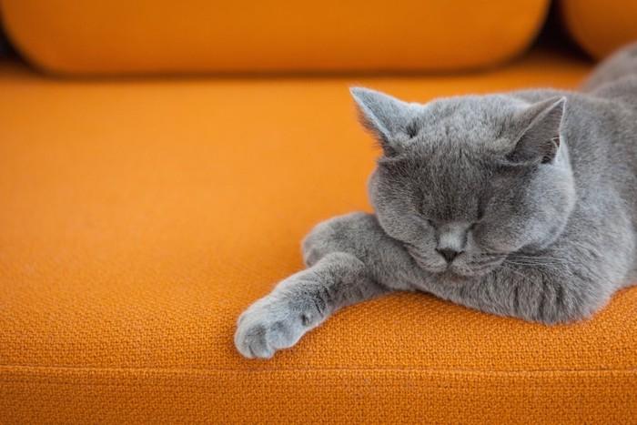 オレンジのソファーで眠るグレーの猫