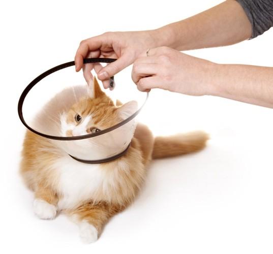 猫にエリザベスカラーをつけてあげる人