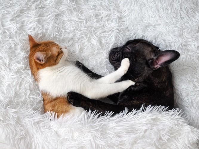 2匹でくっつく犬と猫