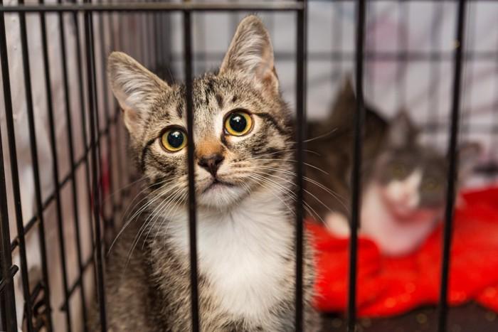 柵の中の猫