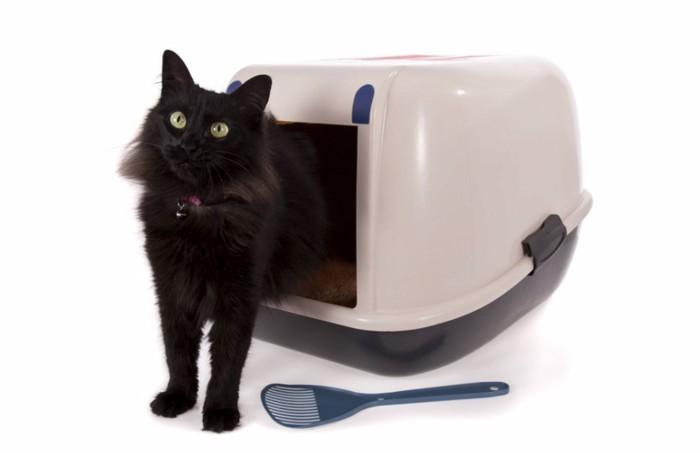 システムトイレと猫