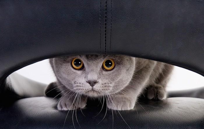 陰からこっそりと見つめる猫