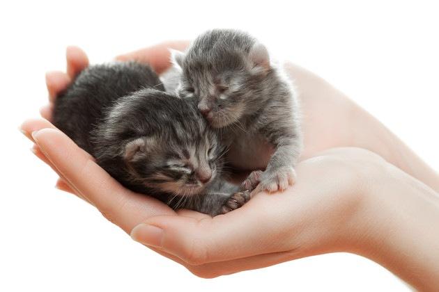 手に載っている生まれたての子猫