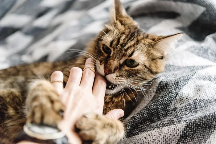 人の手を噛む猫の写真