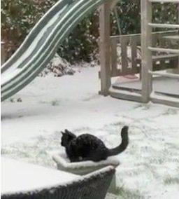 くぼみに入る猫
