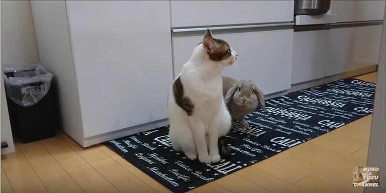 猫にくっついて座るウサギ