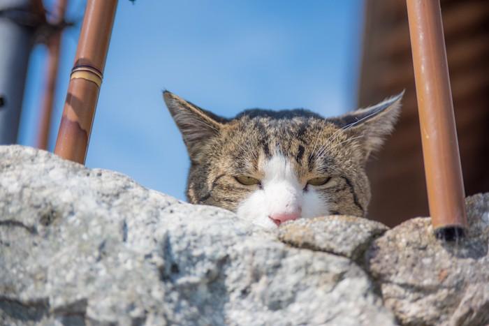 警戒して隠れている猫