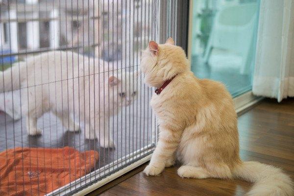 猫同士の間に仕切り