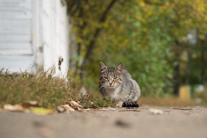 道端でこちらを見つめる猫