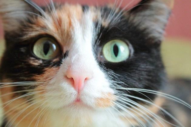猫の顔のアップ