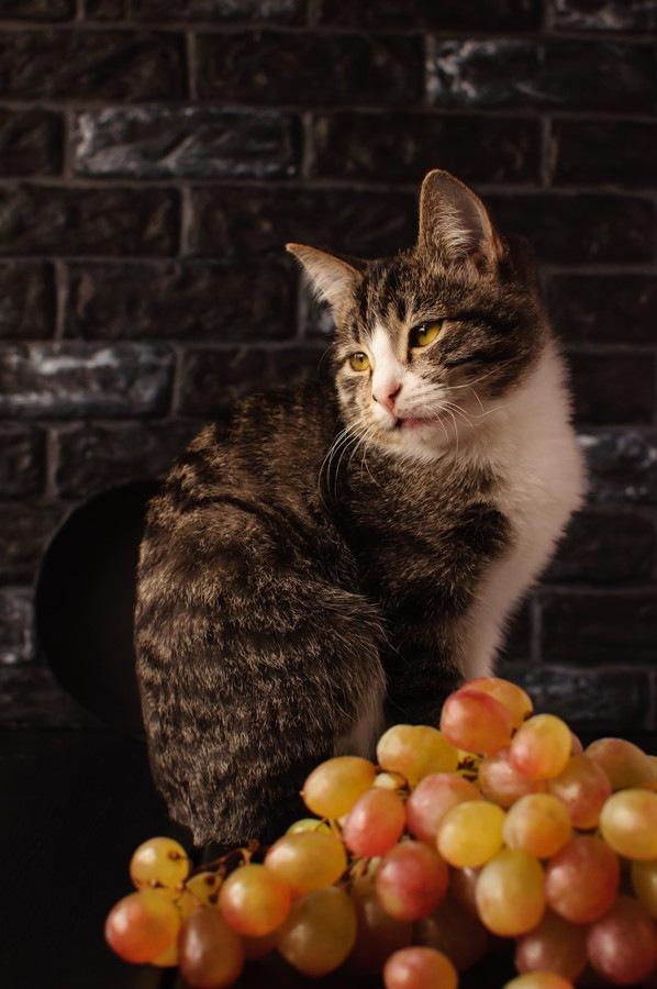 ぶどうと猫