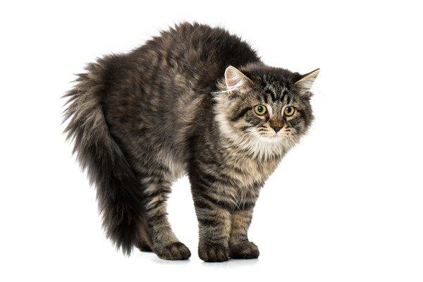 ビックリるする猫