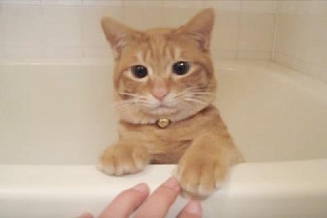 そっと手を離す猫