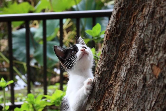 木に登ろうとする子猫