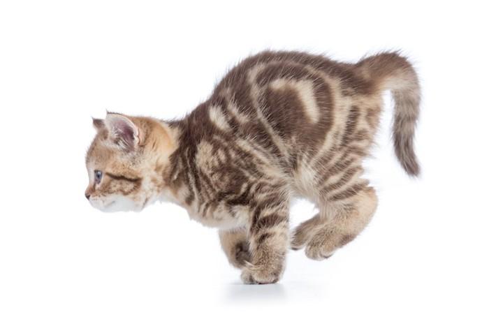 走る横向きの子猫