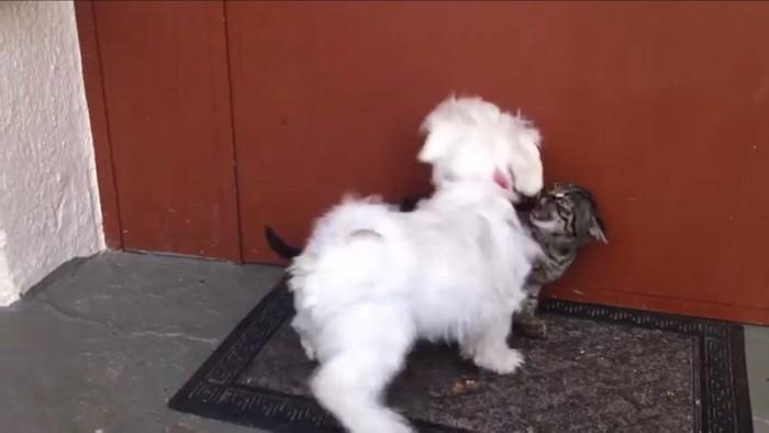 猫にからむ犬