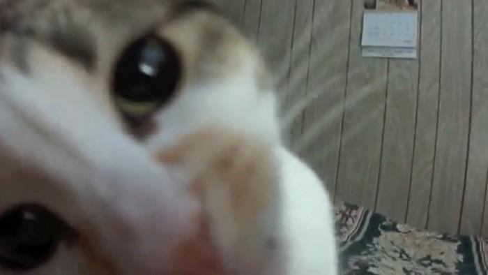 猫が顔出す
