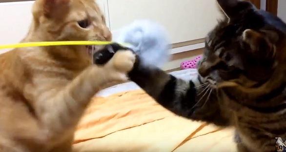 握手する猫たち