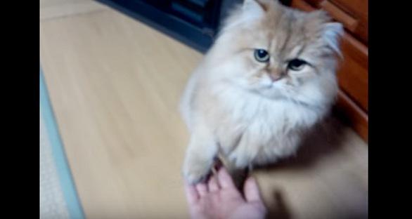 オカワリをする猫