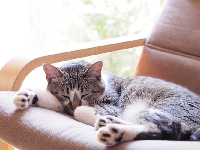 ソファーの上で日なたぼっこする室内飼いの猫