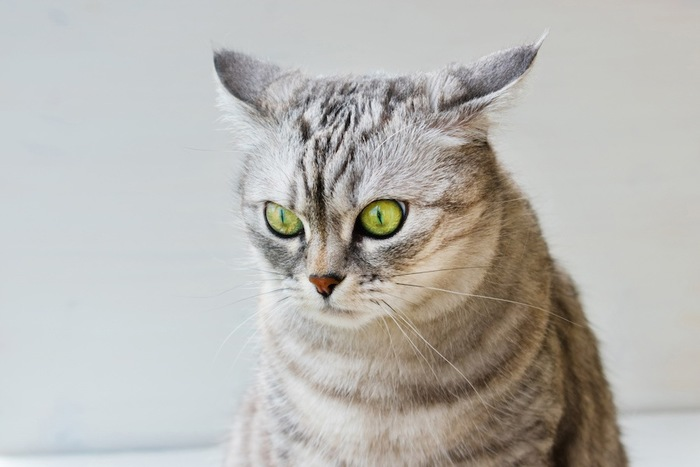 嫌な音を聞いて固まる猫