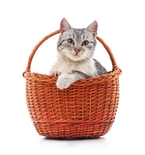 かごに入っている猫