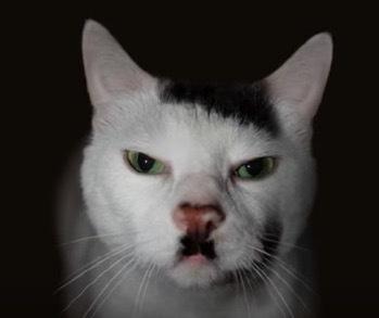 珍しい柄猫5