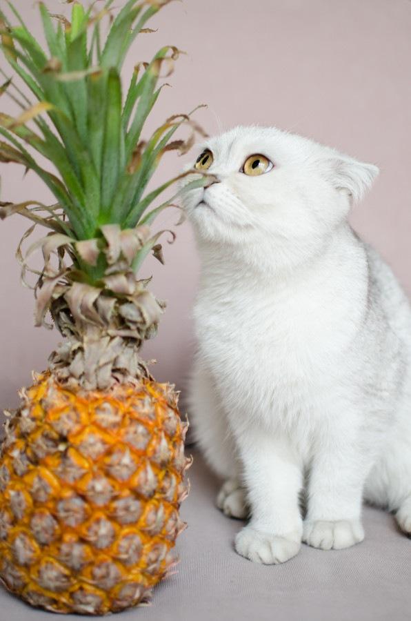 白猫とパイナップル