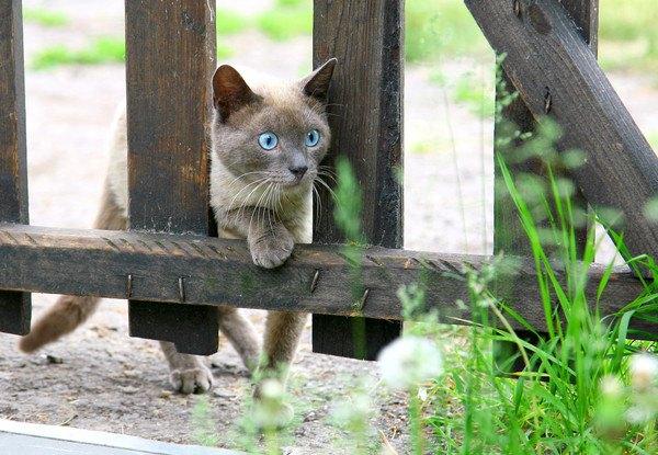 垣根をこえる猫