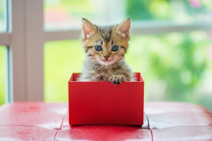赤い箱に入った子猫