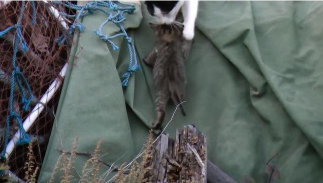 よじ登る子猫と手を添える母猫