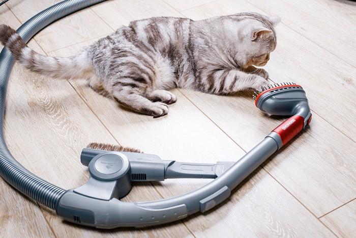 掃除機に触れる猫
