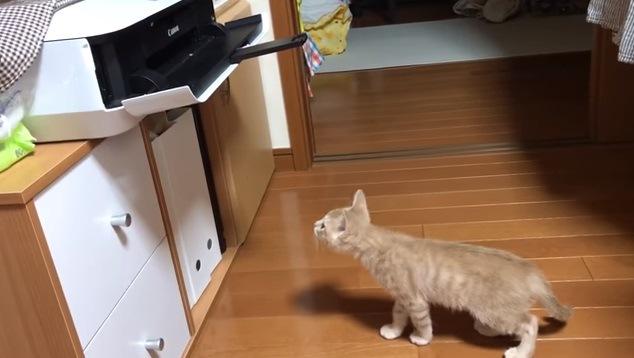 プリンターに近付く子猫
