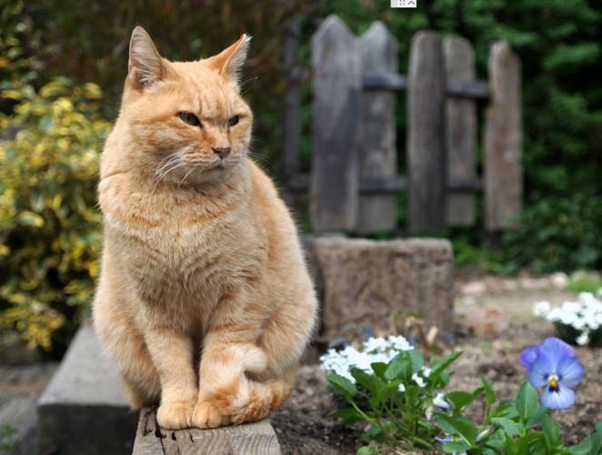 庭で顔をしかめている猫