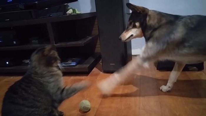 ボール阻止
