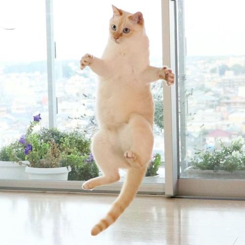 踊るチャコちゃん11