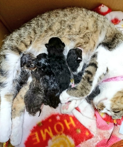 授乳中の親猫と子猫