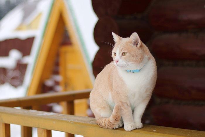 ベランダの柵の上に立つ猫