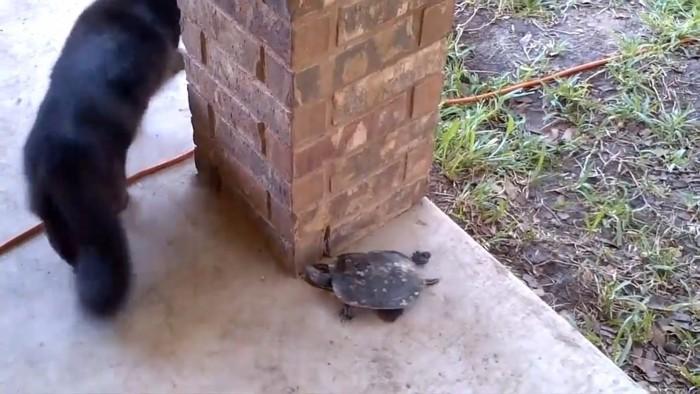猫を追いかける亀