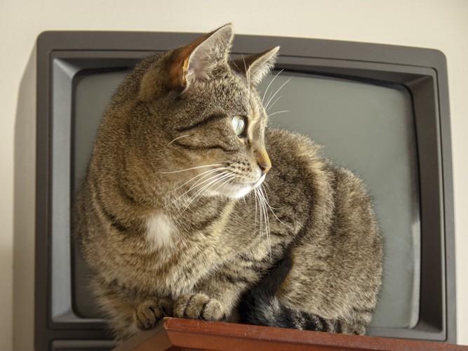 テレビの前で邪魔をする猫