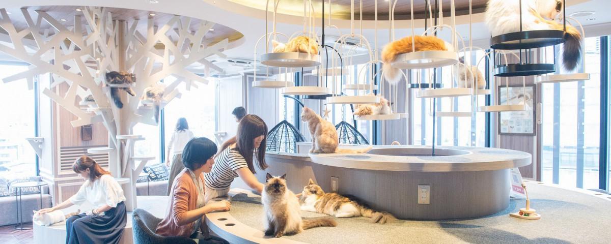 猫カフェ MOCHA(モカ) 渋谷店トップ画像