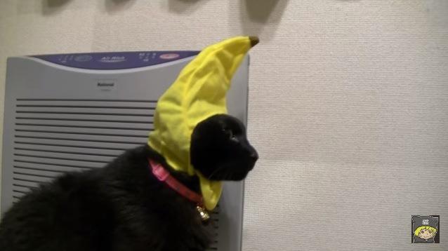 黄色い被り物の黒猫(横向き)