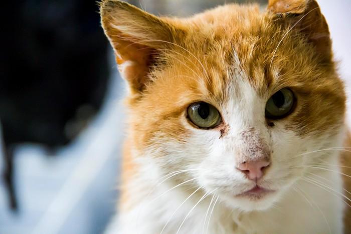 綺麗な瞳の猫