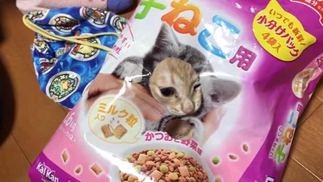 片目を瞑り袋から顔を出す猫